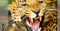 Amazing Animals Jigsaw Puzzles