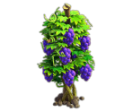 Grapes Tree