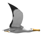 Albatross and Objects