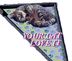 Love your cat AD