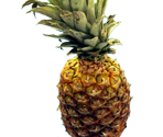 Pineapple-Sensei