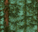 Forest Backgrounds