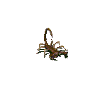 Radscorpion (Baby)