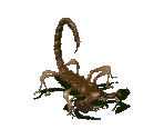 Radscorpion (Adult)
