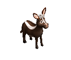 Striped Donkey