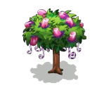 Mashmallow Tree